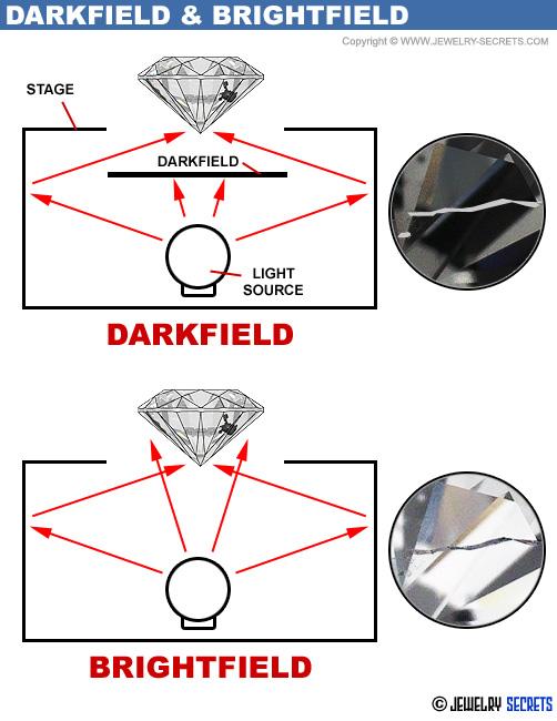 Microscope Brightfield Darkfield Explained