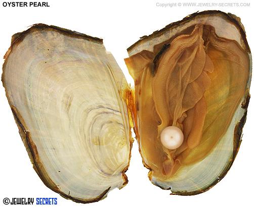 Oyster Pearl inside Mollusk