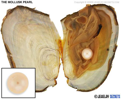 The Mollusk Wish Pearl