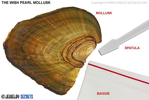 The Wish Pearl Mollusk
