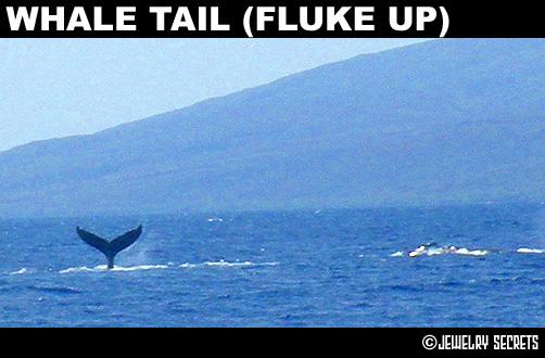 Maui Humpback Whale Tail Fluke Up