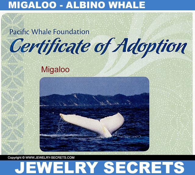 Migaloo Albino Whale